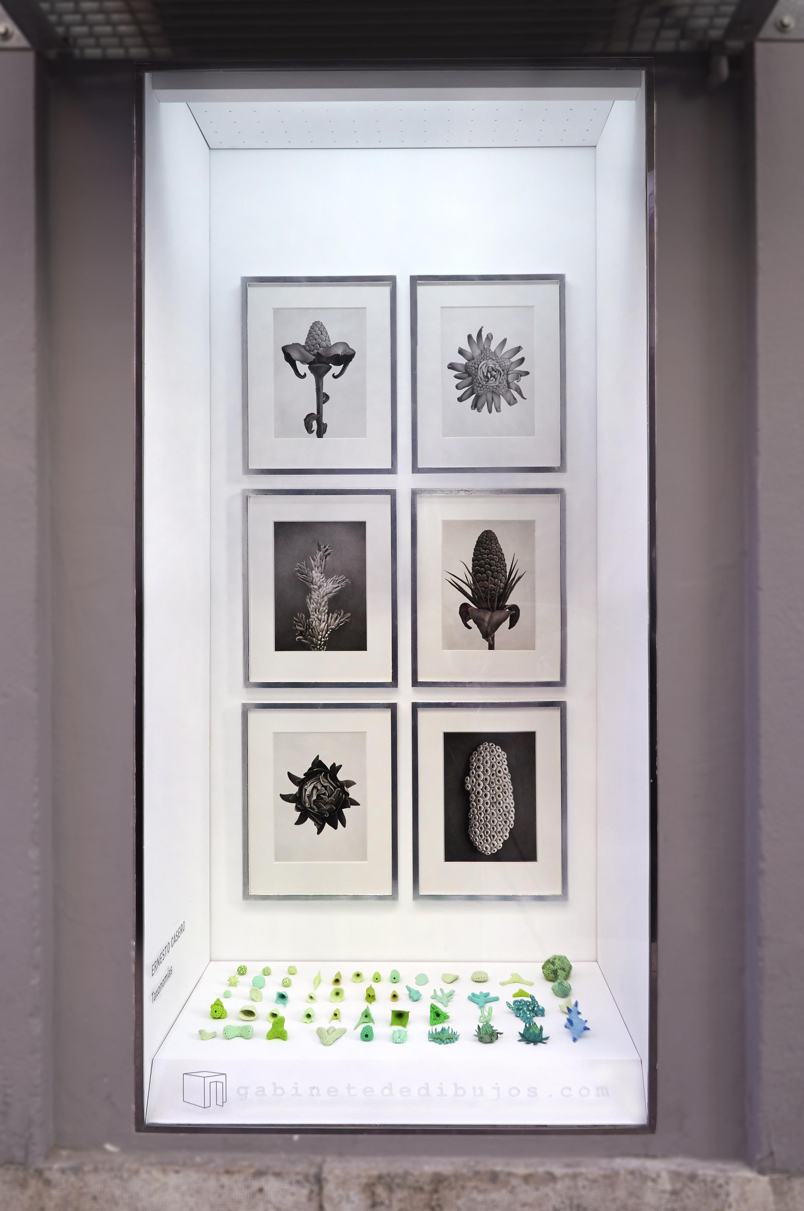 TAXONOMÍAS de Ernesto Casero en el Gabinete de dibujos