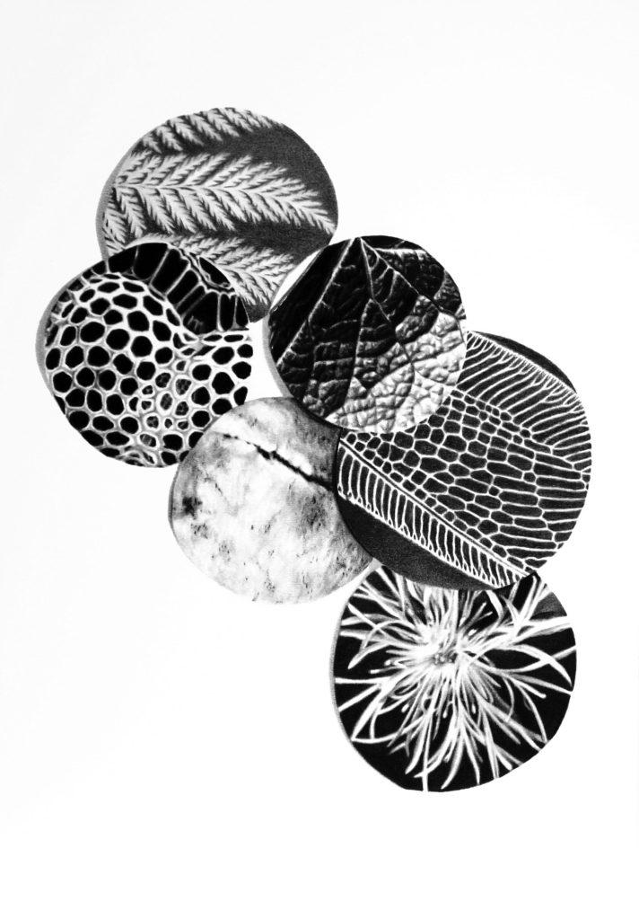 Sin título 3, 2020. Lápiz-carbón sobre papel montado sobre dibond, 50 x 35 cm