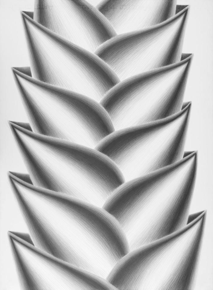 Heliconias, 2013. Lápiz sobre papel, 76 x 56 cm