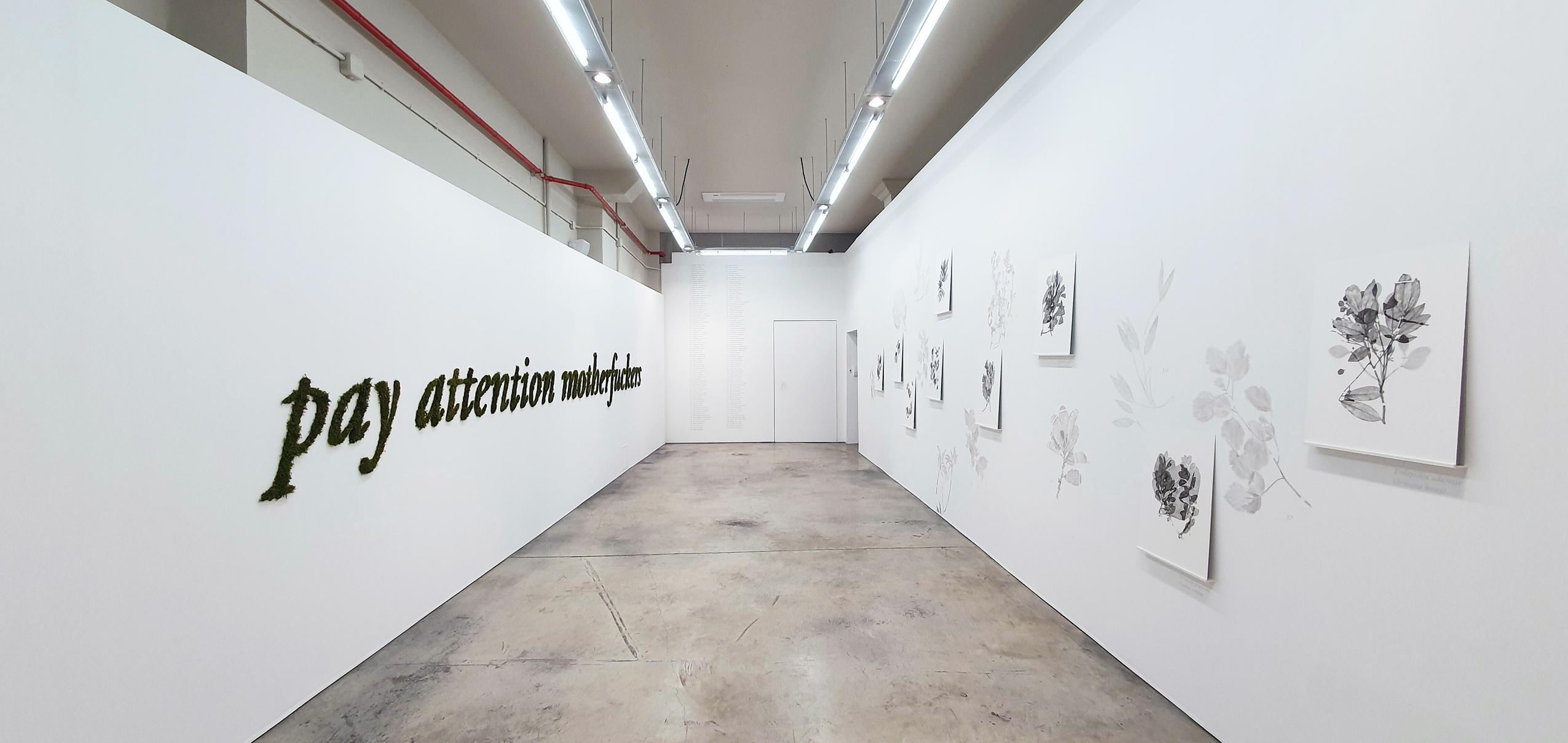 Vista de la exposición Las plantas perdidas de Ernesto Casero
